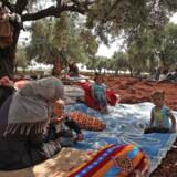 Internt fordrevne søger ly under et oliventræ i en landsby tæt på Syriens grænse til Tyrkiet. Bombardementer fra regimet og Rusland har drevet hundredtusinder på flugt den seneste uge.