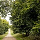 »Den statslige skov er vores alles, men der er en mangeårig tradition for, at Naturstyrelsen skal tjene penge på skovdrift. Det vil Alternativet lave om på.«