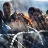 En kvinde skriger, mens migranter og flygtninge demonstrerer bag et hegn ved grænsen mellem Grækenland og Makedonien. »Vi er det rigeste kontinent i verdenshistorien, og indvandringen i flygtningesommeren 2015 bidrog med to promille til Europas befolkning. Hvordan skulle det kunne vælte os?« siger Carsten Jensen som reaktion på indvandringen. Foto: AFP Photo/Dimitar Dilkoff.