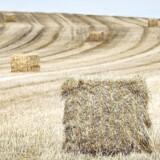 Landbrug & Fødevarer satser på, at man med ny teknologi kan omdanne resthalm til klimaneutralt flybrændstof og til såkaldt biokul, der lagrer kulstof i jorden i mange hundrede år. Ifølge beregninger vil det ad åre kunne halvere landbrugets store klimaaftryk.