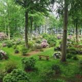 Den romantiske park ved Nivaagaard er blandt meget andet kendt for sine mange rodondendronbuske. Hvert år kommer adskillige nye til.