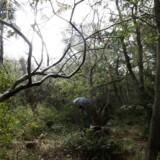 »Engang skulle man rydde en lysning i naturen for at grundlægge civilisationen; i dag bør vi rydde en lysning i civilisationen for at bevare naturen, også vores egen, indre natur,« skriver Kasper Støvring.