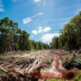 Maskiner har ryddet regnskoven på Sumatra. Har vi råd til at fortsætte med at gøre indhug i naturen?