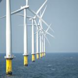 Arkivfoto fra Ørsted havvindmøllepark Horn Rev 2 i Nordsøen ud for Esbjerg. Vindmølleparken i den nye aftale skal hedde Ocean Wind og kommer til at ligge ud for Atlantic Citys kyst. Hvis Ørsted træffer en endelig investeringsbeslutning, forventes parken at stå færdig i 2024.