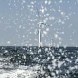 Flere delstater på især USAs østkyst har fuld fart på store satsninger med havmølleparker, der gør op med forestillingen om, at landet med Donald Trump i spidsen vender ryggen til vedvarende energi. Her den danske havvindpark Horns Rev 2 i Nordsøen ud for Esbjerg.