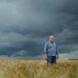 Kaj-Anton Pedersen, dansk landbrugsekspert ved CPF-Agro i Rusland, står på en af sine enorme marker.