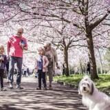 »Man skal huske på, at arveskatten er en »trippelskat« for personer, der lægger vægt på at give deres opsparing videre til deres børn, når de afgår ved døden,« skriver Mads Lundby Hansen.