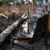 Omfattende rydning af Amazonas og flere skovbrande har fået europæiske topledere til at opfordre til handling.