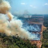 Amazonas brænder og brænder. Billedet er taget i Novo Progresso, der ligger i den brasilianske stat Pará. Skovbrandene har udløst en større international krise.
