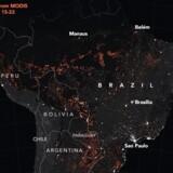 Kortet viser aktive brande observeret 15.-22. august. Det afslører, at det langtfra kun er i Brasilien, skovbrandene hærger.