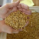 Kina vil ikke lægge yderligere told på blandt andet sojabønner fra USA, oplyser Kinas statslige nyhedsbureau, Xinhua.