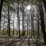 Hvis Danmark får en en million nye træer som følge af indsamlingen under lørdagens store TV-show, vil de med tiden kunne kompensere cirka 200 danskeres årlige udledninger, fastslår professor.