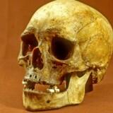 Dna-undersøgelser viser, at 10.000 år gammelt skelet kaldet »Koelberg-kvinden« faktisk er liget af en mand og ikke en kvinde, som hidtil antaget. Foto: Erik Thomsen/Scanpix 2017