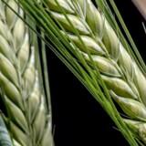 Karen Hækkerup fremhæver den cirkulære bioøkonomi som en mulighed for at øge Danmarks fødevareeksport yderligere.