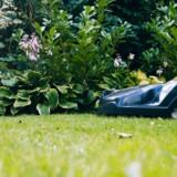 Har du en jævn, ukompliceret og ikke alt for stor græsplæne, bør du kunne klare dig med en forholdsvis enkel model til omkring 10.000 kroner ifølge testvirksomheden Bedst-i-Test.