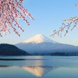 Mount Fuji og Lake Kawaguchiko i Japan.I Japan har regeringen næsten halveret sit skøn for væksten i år.