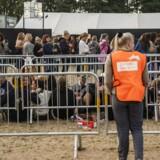(ARKIV) Status over koncertarmbånd, der skal øge sikkerhed. Som noget nyt har Roskilde Festival indført armbånd, som deltagerne skal have, hvis de vil have en plads forrest (i pitten) foran Orange scene. Der uddeles 3000 til hver koncert. Ritzau taler med festivalens sikkerhedschef om, hvordan det er forløbet, om det øgede sikkerheden, og hvad planen er fremadrettet. (Foto: Olafur Steinar Gestsson/Scanpix 2018)