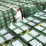 Arkivfoto. Den store, toneangivende råvarebørs Global Dairy Trade, GDT, har netop afholdt en auktion, hvor priserne på mejerivarer er faldet med i gennemsnit 6,3 pct.