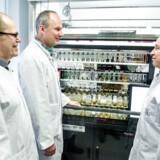 Holdet bag Semaglutid fra Novo Nordisk. Præparatet, der er diabetesbehandling i pilleform, har potentiale til at blive et af Novos vigtigste produkter, ifølge analytikere. Foto: Niels Ahlmann Olesen