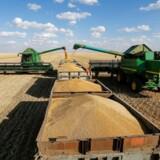 I værste fald kan klimaforandringerne omkring år 2100 komme til at udsætte hele 60 procent af klodens hvedearealer for tørke. Her er hvedehøsten på vej i hus i Kasakhstan.