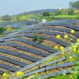 »Politikere skal vise vejen, ikke blokere den. De skal gøre det gunstigt for erhvervslivet at springe ud i den grønne omstilling - skabe tryghed ved at investere i de løsninger, der skal gøre planeten grønnere i morgen,« skriver Tommy Ahlers.