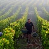 Et af de europæiske produkter, der bliver ramt af nye amerikanske tariffer, er fransk vin, der fra 18. oktober vil koste ti procent mere, når den bliver importeret til USA. Handelskrigen gør kun os alle fattigere, skriver Uffe Ellemann-Jensen.