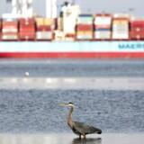 Skibstrafikken fylder meget i verdens udledning af drivhusgas, og her er Mærsk en af de tungeste spillere, men det vil selskabet lave om på.