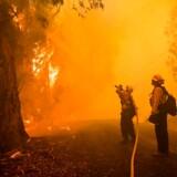 Brandmænd kæmper for at slukke Kincade Fire 27. oktober. Men i dag, 31. oktober, har de stadig ikke fået branden nedkæmpet.