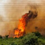 Unikke dyr, stammer af oprindelige folk og 1,2 millioner mennesker er afhængige af naturområde i brand.