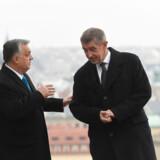 Den tjekkiske premierminister Andrej Babiš (th.) og den ungarske kollega, Viktor Orbán har et par kedelige hovedroller i en afsløring om misbrug af landbrugsmidler fra EU.