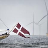 Sandheden om det officielt ganske grønne og klimavenlige Danmark er mere sort, end de fleste forestiller sig. Her stævner kongeskibet Dannebrog gennem den store havvindmøllepark nær Anholt i kattegat.