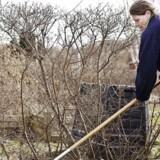 Hvis lysten til havearbejde er større end lysten til lønarbejde, så får flere og flere danskere mulighed for at gå tidligere på pension.