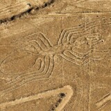 Denne edderkop har været af arkæologerne i årevis og er ikke nyopdaget. Den er mere end 40 meter lang.