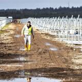 Det behøver ikke at være meget dyrt samlet set at nå klimamålet. Det Miljøøkonomiske råd anslår, at det vil koste Danmark ca. 0,5 procent af BNP at gøre os fri af de fossile brændsler i 2050. Det svarer til tabet ved, at den økonomiske vækst stopper i mindre end et halvt år for derefter at fortsætte som hidtil. Her anlægges en stor solcellepark ved siden af Thisted Lufthavn i Thy