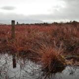 Her endte David Sullivan sit liv – i en vildmose ved Belcoo på grænsen mellem Nordirland og Irland.