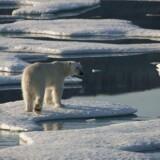 i år har FNs klimapanel (IPCC) advaret om, at isen smelter med accelererende hast. Af de 19 varmeste år, vi har målt siden 1880, finder vi 18 af dem efter 2001, og de seneste fem år har været de varmeste, skriver kronikørerne.