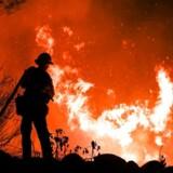 »Om det er skovbrænde i Australien og Sydamerika, ekstrem tørke i Østafrika eller massive problemer med vandforsyning på den amerikanske vestkyst,« skriver Steen Jakobsen.