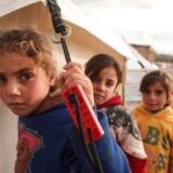 Siden midten af december har det syriske regime med hjælp fra Rusland intensiveret sin luftoffensiv mod Syriens sidste oprørskontrollerede provins, Idlib, og drevet omkring en kvart million civile på flugt.