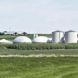 »Biogas bliver en stor del af løsningerne. Al gylle skal gennem biogasanlæg, så metanen bliver til enten erstatning af fossil gas, eller gyllen kan blive den el-leverandør, der kan forsyne elnettet, når vindmøller og solceller står stille på en vindstille nat,« skriver Thor Gunnar Kofoed.