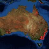 Her er en ægte NASA-visualisering af den seneste uges brande i Australien. Billedet er dannet på baggrund af data fra NASA FIRMS (Fire Information for Resource Management System). Sammenlign med billedet fra Morten Løkkegaards Facebook-opslag.