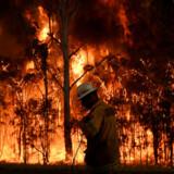 2.000 brandmænd kæmper mod brande i delstaten New South Wales. De danske brandmænd skal ikke bekæmpe naturbrandene, men derimod rydde op efter brandene.