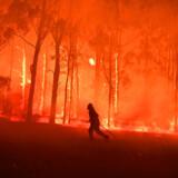 De aktuelle og gigantiske brande i Australien har raseret et område større end Danmark - og har pt. kostet estimeret 500 millioner dyr livet. Det diskuteres stadig om brandenes omfang er et resultat af klimaforandringer, men holder forfatterens forudsigelser stik, vil vi se langt flere af denne type katastrofale hændelser i fremtiden.