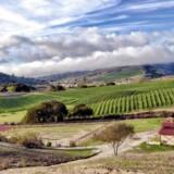 Dalen omkring Santa Barbara i Californien lægger jord til et af USAs bedste vinområder – det fik en dansk civilingeniør til at beslutte, at det var lige netop her, han og konen skulle slå sig ned. I dag er de vinbønder.