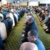 Arkivfoto. Fredagsbøn i Fredens Moské i Aarhus. Ifølge flere indvandrerkvinder er de fleste imamer i Danmark ikke villige til at behandle skilsmissesager, når kvinderne hendvender sig. Heller ikke, hvis der er tale om voldelige ægtemænd.