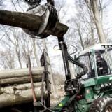 Skovbrug er en af de alternative investeringer, der forventes at give de højere afkast i de kommende år.