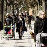 Børn, løbetøj og klapvogne luftes livligt under lindene på Frederiksberg Allé.