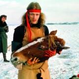Bjørn Nørgaard fotograferet af Jørgen Schytte for 50 år siden dén afgørende dag, da han dissekerede en hest på en sneklædt mark i Kirke Hyllinge. Bjørn Nørgaard slagtede ikke selv hesten. Det gjorde en udlært slagter.