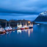 I Bø nord for polarcirklen i Nordnorge lever man især af lakseopdræt, fiskeri af den norsk-arktiske torsk, skrei. Nu vil man også forsøge at lokke rige skatteydere til med lavere formueskat end i resten af Norge.