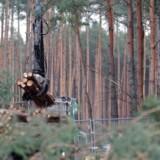 Skovrydningen på Grünheide nær Berlin kan nu gennemføres, så Tesla kan bygge sin elbilfabrik.