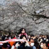 I Japan har det i årtier været en integreret del af kulturen at gå med maske, for eksempel når man går ud for at nyde kirsebærtræerne blomstre. Men i år synes maskerne at give ekstra god mening.